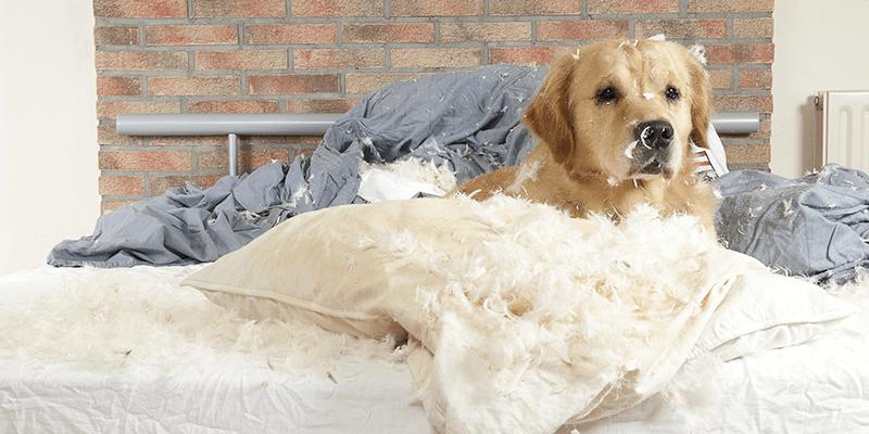 Dog destroys bed